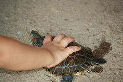 My turtle Royalty Free Stock Images