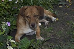 My nice dog in my garden Royalty Free Stock Photography