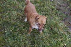 My nice dog on the grass Stock Photos