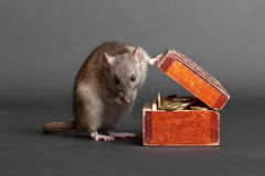 My wealth. Domestic rat with an old box of money Royalty Free Stock Photography