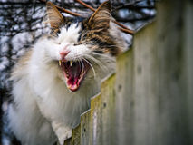 My, what a big mouth you have. Not-a-morning cat is unamused by your morning camera visit Stock Photo