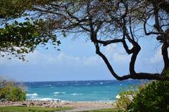 Enjoying the Beach Stock Photography