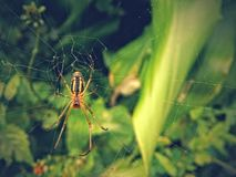 Spider on Vibes royalty free stock photography