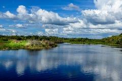 Myakka河国家公园,佛罗里达 库存图片