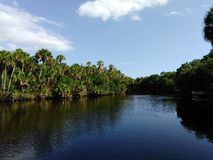Myakka flod Arkivfoto