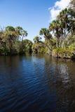 Myakka flod i Florida Arkivfoto
