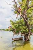 Myanmar 26 de agosto de 2014: As crianças de Myanmar estavam saltando Imagens de Stock Royalty Free
