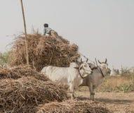 Myanmar Obrazy Royalty Free