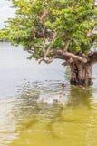 Myanmar-Augusti 26th, 2014: Myanmar barn hoppade Royaltyfria Bilder