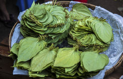Myanmar, betel leaves Royalty Free Stock Photos