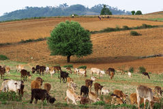 Myanmar countryside Royalty Free Stock Photos