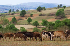 Myanmar countryside Royalty Free Stock Photography