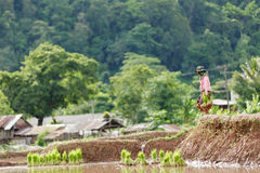 Myanmar farmer. Maesot  Tak Thailand June 25 2016 Myanmar farmer Royalty Free Stock Images