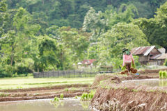 Myanmar farmer. Maesot Tak  Thailand June 25 2016 Myanmar farme Royalty Free Stock Images
