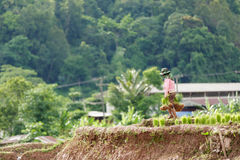 Myanmar farmer. Maesot Tak  Thailand June 25 2016 Myanmar farme Royalty Free Stock Photo