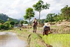 Myanmar farmer Stock Image