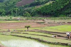 Myanmar landbouwer Stock Fotografie