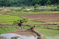 Myanmar landbouwer collec Stock Afbeeldingen