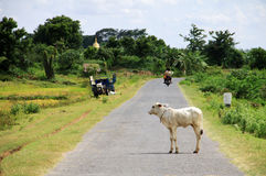 Myanmar landscape with a small road Royalty Free Stock Photos