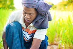 Myanmar male farmer Royalty Free Stock Photography