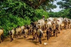 Myanmar panorâmico Imagem de Stock