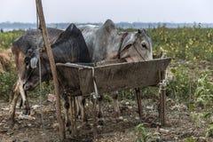 Myanmar. South Asia, Travel Photo Stock Photo