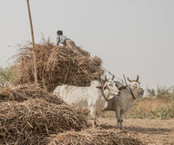 Myanmar. South Asia, Travel Photo Royalty Free Stock Images