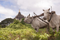 Myanmar Travel Images Stock Photography