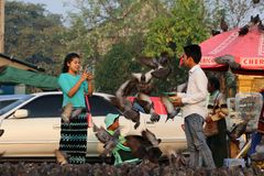 Myanmese couple feeding many pigeons on the road at Yangon. man is feeding birds and woman is photographers. Yangon, Myanmar - Feb 25, 2019 : Myanmese couple stock images