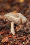 mycète de forêt images stock