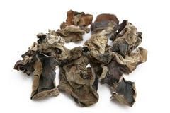 Mycète noir photographie stock