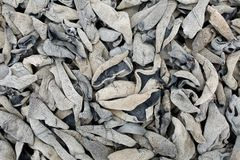 Mycète noir sec image stock