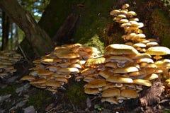mycètes photos stock