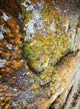 mycètes photo libre de droits
