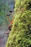 Mycètes d'arbre images libres de droits