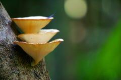 Mycètes tropicaux Photos libres de droits