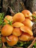 mycelium Royaltyfri Bild