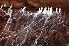 Mycelium strange space object  bread. Mycelium strange space object on bread Stock Photo