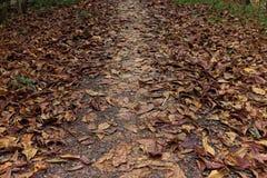 Mycket av det bruna bladet på banan Royaltyfria Foton