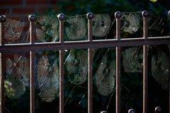 mycket av spindeln Royaltyfri Bild