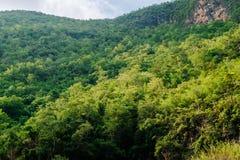 Mycket av trädet på berget royaltyfri fotografi