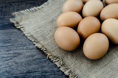 Mycket bruna fega ägg Arkivbilder