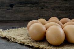 Mycket bruna fega ägg Arkivbild