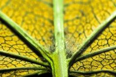 Mycket extrem närbild av ett grönt blad arkivfoton