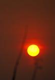 Mycket första fas av den partiska solförmörkelsen Arkivfoto