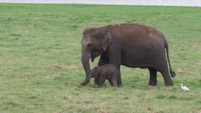 Mycket förtjusande behandla som ett barn elefanten royaltyfri fotografi