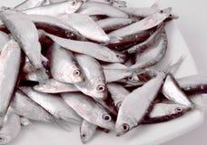 Mycket fisk på en platta Arkivbild