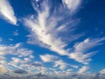 Mycket fjädermoln i början av solnedgången mot den blåa himlen, vinden Arkivbilder
