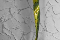 Mycket flyger fångat på den klibbiga klipska stopparen i grå bakgrund s Arkivbilder