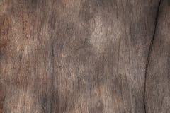 Mycket fullständigt och släta textur av trädet arkivfoton